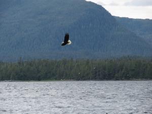 bald-eagle-18926_640